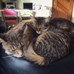 Cats15