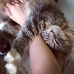 Cats32
