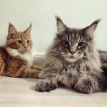 Cats35