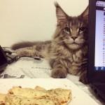 Cats42