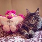 Cats44