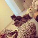 Cats47