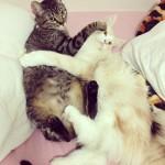 Cats66